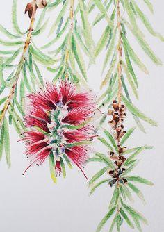 Bottlebrush print A4 vertical art print of Australian native