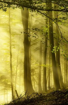 bluepueblo:  Sun Drenched Forest, Switzerland photo by robin
