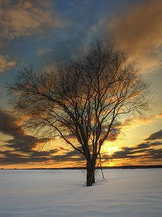 tree in winter sunset