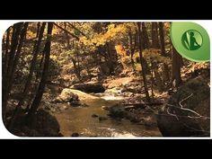 Música Anti-Depressão e Ansiedade, Equilibrio dos Chácras com Sons da Natureza - YouTube