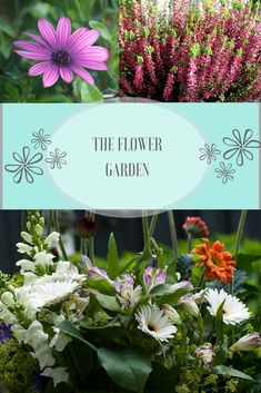 6ad425ef070d1d 52 best The Flower Garden images on Pinterest