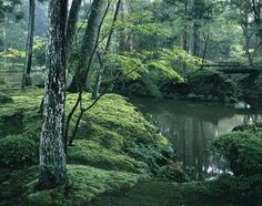 Kokedera, also known as Saihoji, also known as the Moss Temple, is one of the most spectacular places in Kyoto, Japan. by MyohoDane Moss Temple, Kyoto Japan, Places, Nature, Naturaleza, Nature Illustration, Outdoors, Lugares, Natural