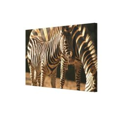 $$$ This is great for          Zebras in zoo gallery wrapped canvas           Zebras in zoo gallery wrapped canvas We provide you all shopping site and all informations in our go to store link. You will see low prices onDeals          Zebras in zoo gallery wrapped canvas Online Secure Check...Cleck Hot Deals >>> http://www.zazzle.com/zebras_in_zoo_gallery_wrapped_canvas-192145073537107954?rf=238627982471231924&zbar=1&tc=terrest