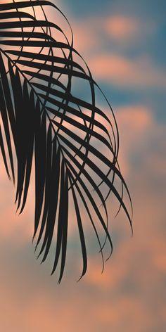 Tumblr Wallpaper, Ed Wallpaper, Plant Wallpaper, Sunset Wallpaper, Screen Wallpaper, Nature Wallpaper, Wallpaper Backgrounds, Computer Wallpaper, Mobile Wallpaper