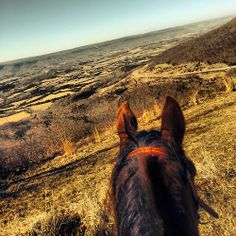 (91) Tumblr Horse Ears, Happy Trails, Trail Riding, Nice View, Ponies, Equestrian, Grand Canyon, Fun, Travel