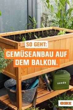 Balcony Garden, Garden Plants, Indoor Plants, Plants Are Friends, Next At Home, Growing Plants, Greenery, Flora, Home And Garden