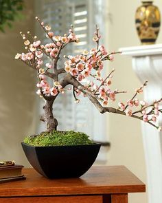Cherry Bonsai Tree ~ Beauty in simplicity, drama in understatement, our artificial cherry blossom bonsai can bring the perfect touches of color and balance to a room. The delicate — and incredibly life-like –cherry blossoms are available in pink or white.