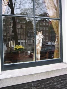 amsterdam window w/ cat and canal house reflections