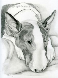 #Bull #Terrier #Dog #Art - Pen Drawing #English #Bully #Doggy #Pet #Terriers #Creative #Dogs #DogArt #Drawing