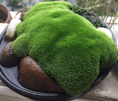 # sgarden # Cheriechi & # scopyright Elf falls into the moss world 2 Moss garden by Cherie. Indoor Water Garden, Indoor Plants, Air Plants, Bonsai Garden, Garden Plants, House Plants, Container Plants, Container Gardening, Growing Moss