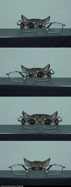 Reminds me of my kitties - AWW - - kitty & glasses I'm training to be a private eye. Let's see should I use this eye or this eye or both eyes? I think this might be harder than I thought. The post Reminds me of my kitties appeared first on Gag Dad. Animals And Pets, Baby Animals, Funny Animals, Cute Animals, Funniest Animals, Sleepy Animals, Funny Horses, I Love Cats, Crazy Cats