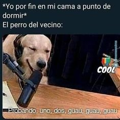 Funny Spanish Memes, Spanish Humor, Best Funny Videos, Best Memes, Funny Images, Funny Photos, Wtf Funny, Hilarious, Im A Loser