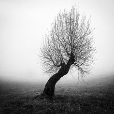 Me,myself and i #selfie #tree #nature #fog #landscape #country #countryside #SombreSociety #winter #selfportrait #bnwsplash_flair #blackandwhitephotography #blackandwhite #instagram #instacool #bnw #bnw_life #bnw_captures
