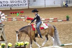 The Journey From a $350 Abused Weanling to a Multiple World Champion | Equine Chronicle