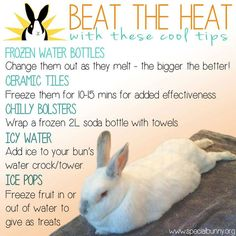 Saw this shared on Facebook. How to keep bunnies cool in the heat! Second Hope Circle helps special needs pets in Ontario find homes through promotion, education and funding! http://www.secondhopecirle.org