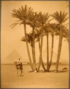 Vintage Postcard The Great Pyramids of Giza