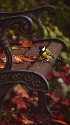 Ꮳoųɭҽųɽʂ ɖ'ᏗųʈoɱɲҽYou can find Herbst bilder and more on our website.Ꮳoųɭҽųɽʂ ɖ'Ꮧųʈoɱɲҽ Fall Pictures, Nature Pictures, Autumn Scenery, Autumn Nature, Autumn Aesthetic, Autumn Cozy, Autumn Park, Saint John, Autumn Photography