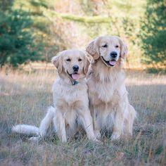 Golden pair