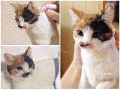 Шерсть производство кошка дневник Hinali