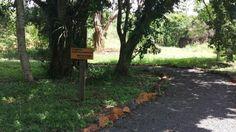 Mabu Interludium Iguassu Convention oferece trilha ecológica para os hóspedes | Jornalwebdigital
