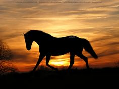 wild horses running - Buscar con Google