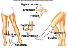 This image shows some examples of the movements of joints and their terminology. Flexion and extension refer to the bending and stretching of joint while hyperextension refers to the stretching of a joint past anatomical position. Dorsiflexion and plantar flexion refers to the flexing and pointing of the foot, respectively. Adduction and abduction refers to the movement towards and away from the midline of the body, respectively.
