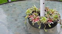 succulent patio table planter, container gardening, flowers, gardening, outdoor furniture, succulents