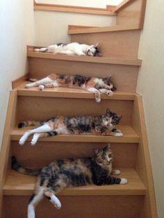 【画像】昇り降りがとても困難な階段