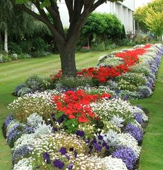 Patriotic Plants | Landscaping | Landscape Care & Ideas