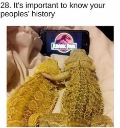 Shoutout to those animals who understand our unrequited love of Netflix. memes # funny memes # Netflix memes # Netflix and chill # funny animals Bearded Dragon Funny, Bearded Dragon Cage, Bearded Dragon Habitat, Funny Animal Pictures, Funny Animals, Tasteless Gentlemen, Venus In Pisces, Bad Memes, Funny Memes