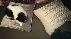 Cushions, Throw Pillows, Toss Pillows, Pillows, Decorative Pillows, Pillow Forms, Decor Pillows, Scatter Cushions, Scatter Cushions
