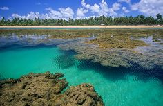 Bela praia da Península de Maraú, Taipu de Fora encanta os visitantes com um magnífico panorama de águas cristalinas, areias brancas, piscinas naturais e coqueiros. Tanto para viajar em família quanto para uma viagem romântica ou com amigos, Taipu de Fora é mais uma praia que se destaca dentro da Bahia que possui um dos litorais mais belos do Brasil.