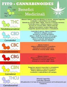 il THC della canapa UCCIDE COMPLETAMENTE IL CANCRO? - CarcinomaEpatico.it