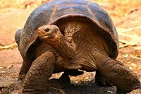 Galapagos Islands Wildlife Discovery - 8 days in Quito and San Cristobal, Isabela & Santa Cruz Islands plus optional Quito extension