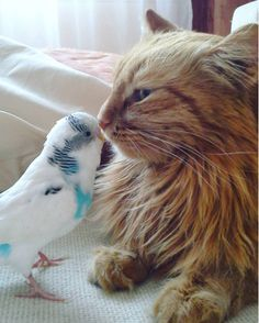 Cat and Bird Do Everything Together