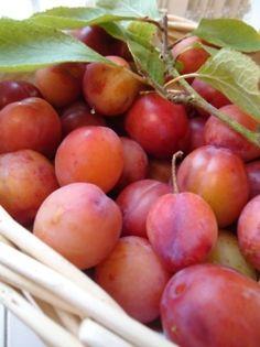 Gorgeous juicy plums, the color inspiration for Plum Pretty LipSense!