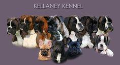 Boxer of Kellaney