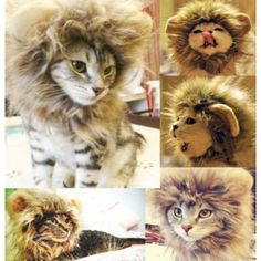 Lion Mane Wig Cat Costume – Available in Sizes S – L! | 1Sale Community