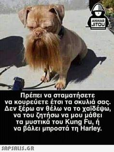 Kung Fu, Funny Photos, Animals And Pets, Jokes, Lol, Funny Shit, Humor, Fanny Pics, Pets