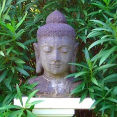 Buddha head in garden