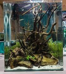 Afbeeldingsresultaat voor aquascaping ideas for small tanks