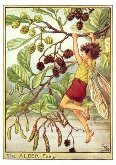 by Cicely Marie Barker