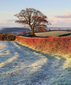 a frosty morning in the English countryside