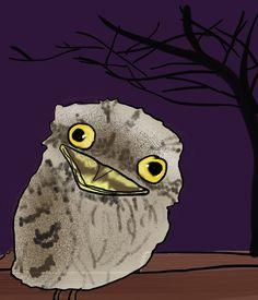 crazy_owl_baby_p-12-02-11.jpg (600×700)