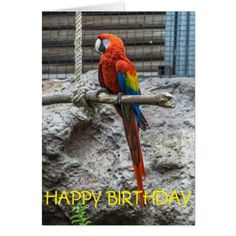 Colourful parrot blank birthday card - occasion gifts gift idea diy