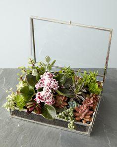 DIY Succulent Box - perfect for wedding centerpieces