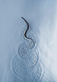 Swimming Snake in Miami. Photo by Adam Fuss, 2012
