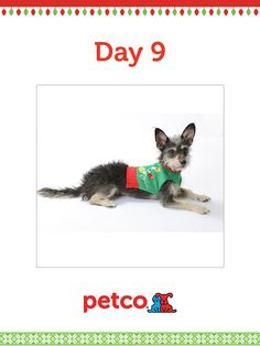 Here is today's 12 Days of Pinterest featured image (12/11/2012). Pin this Lights Sweater image to one of your boards for a chance to win a 500 dollar Petco shopping spree, plus 500 dollar Petco Gift Card for a Petco Foundation Shelter/Rescue of your choice. Winner will be announced tomorrow (12/12/2012) between 12pm and 5pm Pacific Time.