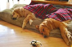 I love how dogs often sleep in tandem! Cute Puppies, Cute Dogs, Dogs And Puppies, Doggies, Best Dogs, All Dogs, Dog Nose, Cool Pets, Mans Best Friend