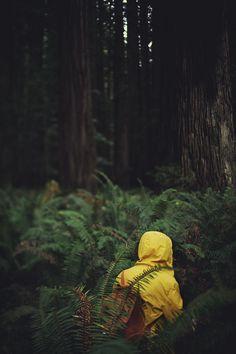 adventure in the ferns